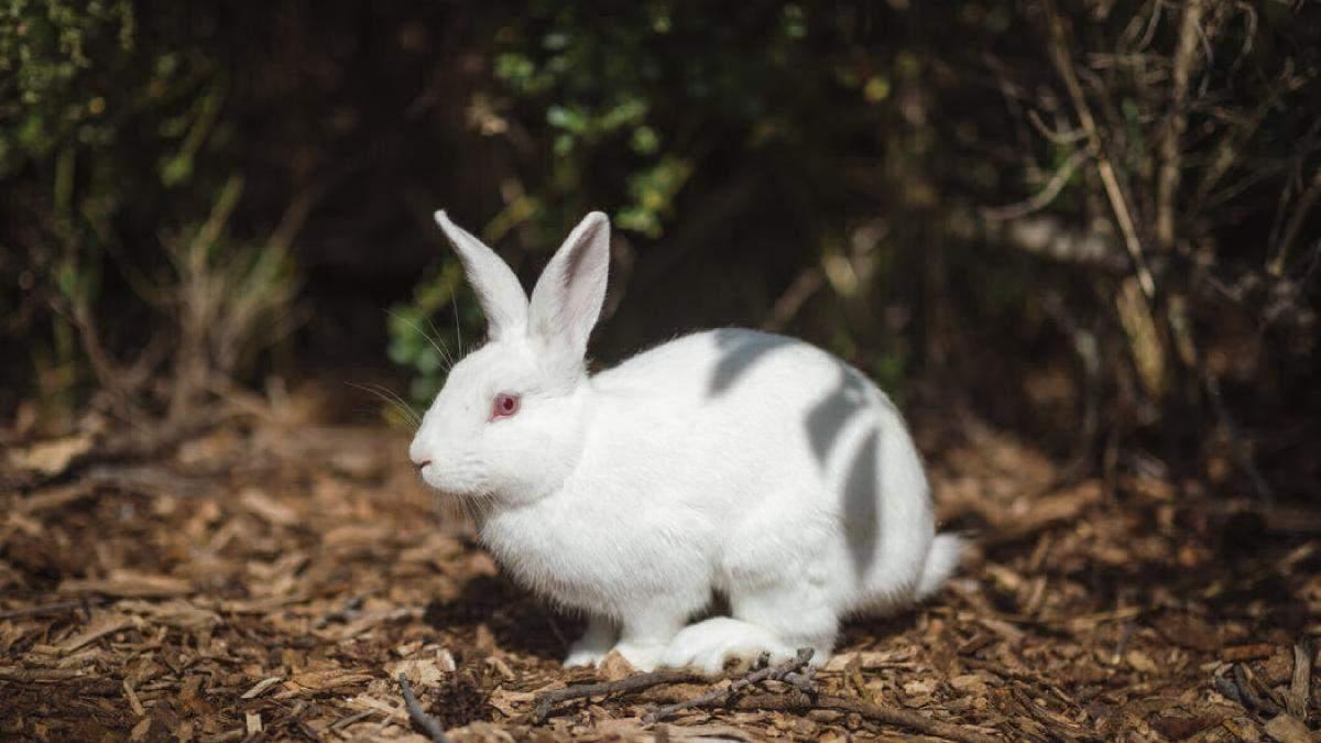 Почему нужно отказаться от косметики, которую тестируют на животных