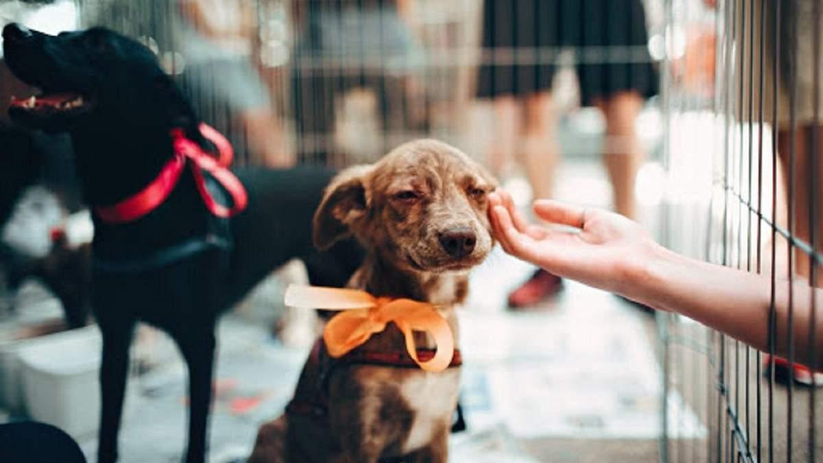 Етична краса для всіх: топ бюджетных б'юті-брендів, які відмовилися від тестування на тваринах