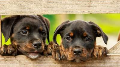 Гуманные бренды, которые не тестируют косметику на животных: список