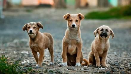 Почему косметику тестируют на животных: 10 причин от нее отказаться